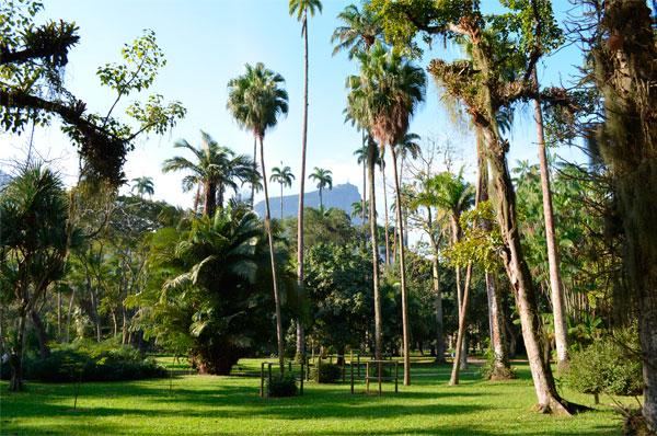 Uma tarde no Jardim Botânico, no Rio de Janeiro.