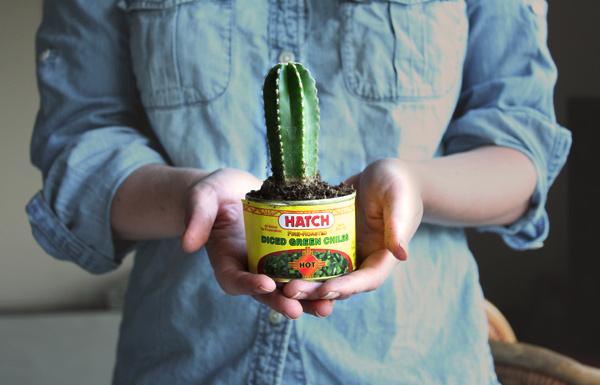 Plantas como lembrancinhas - cactus