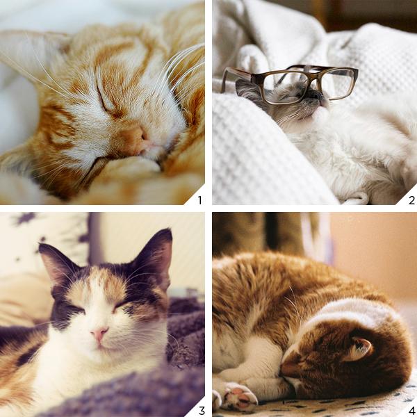 gatinho dormindo_love
