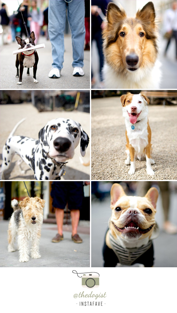instafave: @thedogist