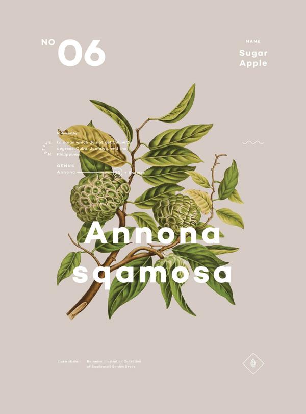 A Few Plants, by Ben Biondo | Inspiração botânica no design